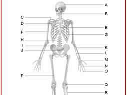 Skeletal System Worksheet Pdf Best Of the Skeletal System Worksheet by Alaadin