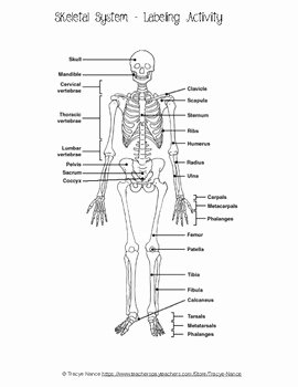 Skeletal System Worksheet Pdf Fresh Skeletal System Labeling Worksheet by Tracye Nance