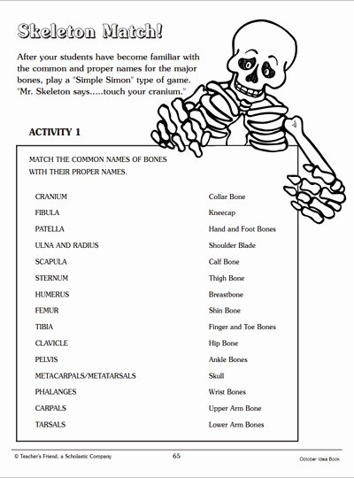 Skeletal System Worksheet Pdf Fresh Skeleton Match Word Matching Page