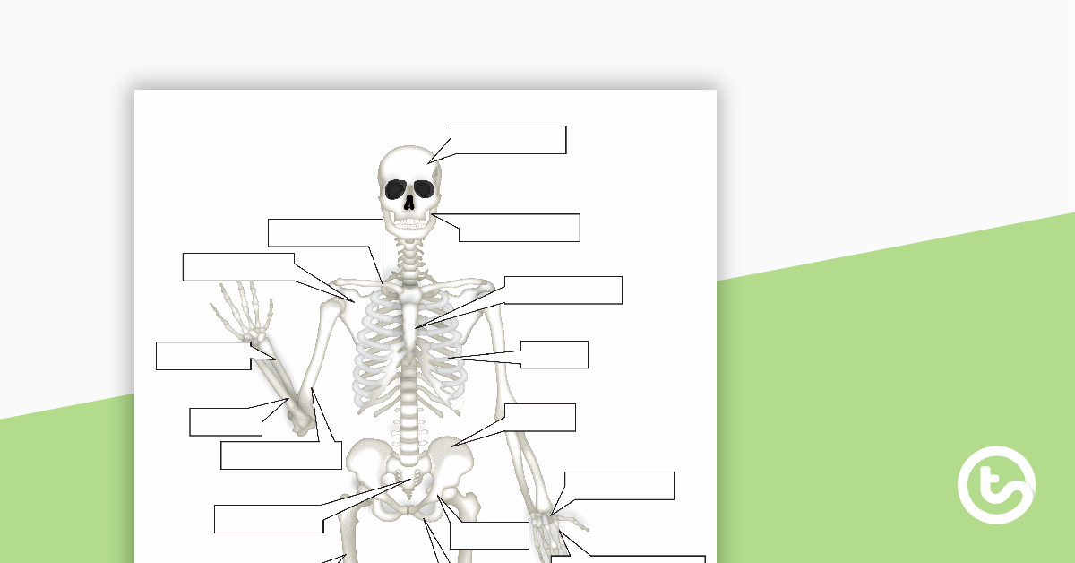 Skeletal System Worksheet Pdf Fresh the Human Skeletal System Worksheet