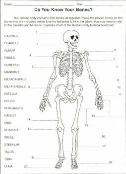 Skeletal System Worksheet Pdf Lovely Label the Bones Worksheet by Samuel Granger