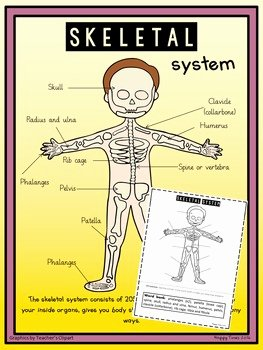 Skeletal System Worksheet Pdf New Human Skeletal System Diagram Poster and Labelling