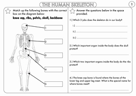 Skeletal System Worksheet Pdf New Year 3 Animals Including Humans the Skeleton Muscles