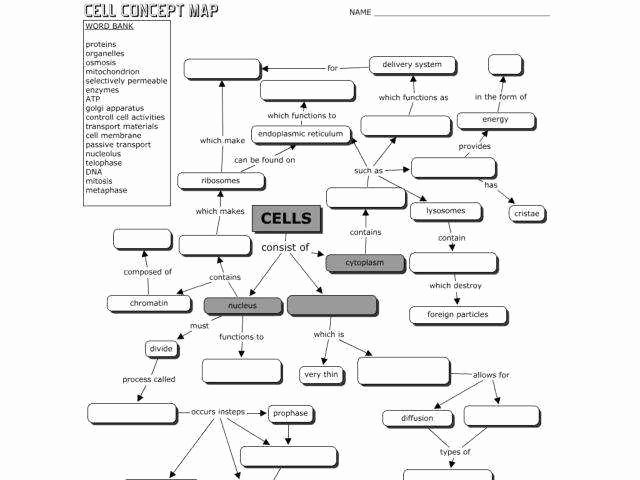 Skills Worksheet Concept Mapping Beautiful Cell Worksheet