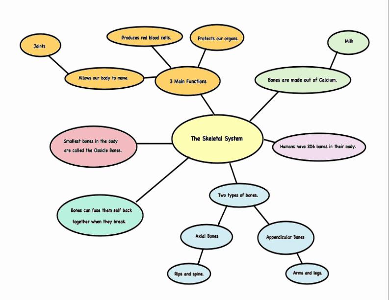 Skills Worksheet Concept Mapping Elegant 2nd Grade Concept Map for the Skeletal System
