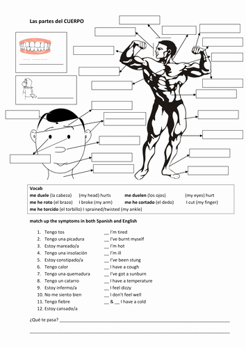 Spanish Body Parts Worksheet Fresh El Cuerpo Worksheet Switchconf