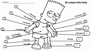 Spanish Body Parts Worksheet Luxury Spanish Body Parts Worksheet by the Fun Language Classroom