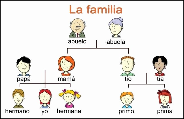 Spanish Family Tree Worksheet Elegant Dvd Video Movie Copy Copying Editing Burning software