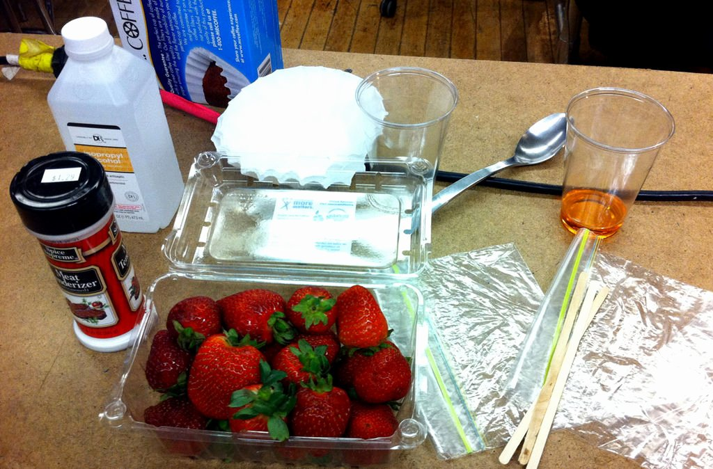 Strawberry Dna Extraction Lab Worksheet Awesome Extracting Dna From Strawberries 12 Steps
