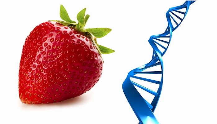 Strawberry Dna Extraction Lab Worksheet Awesome Strawberry Dna Activity