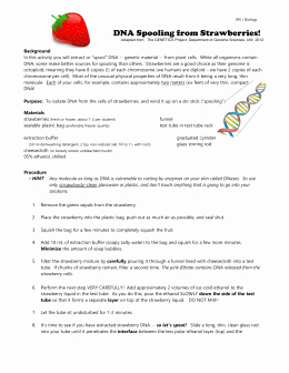 Strawberry Dna Extraction Lab Worksheet Beautiful Strawberry Dna Extraction