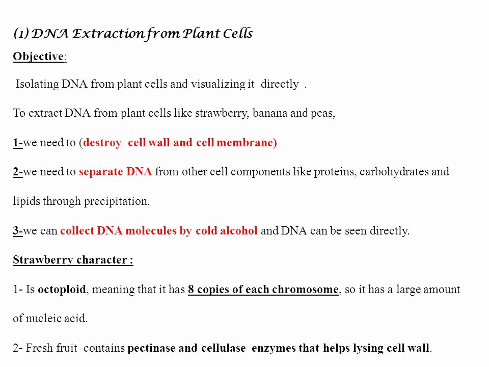 Strawberry Dna Extraction Lab Worksheet Elegant Strawberry Dna Extraction Lab Report College Homework