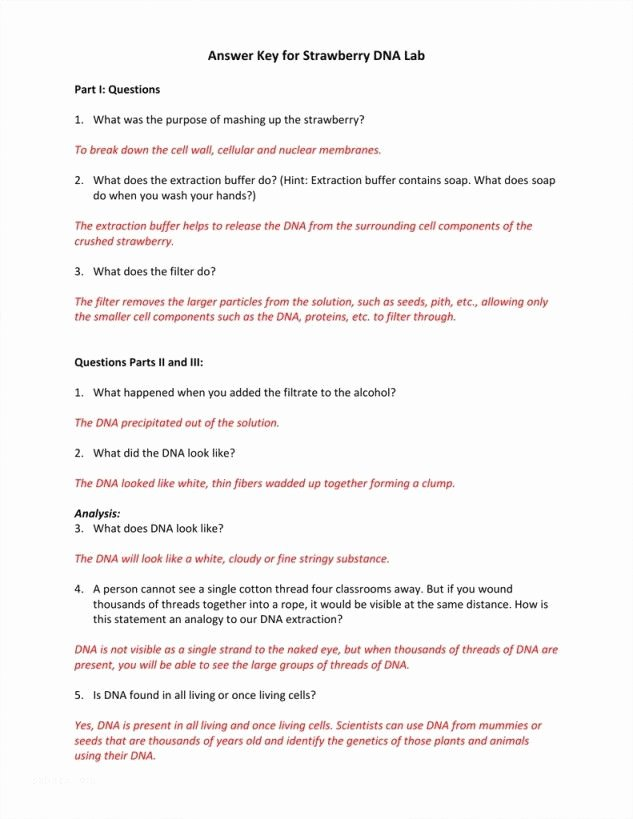 Strawberry Dna Extraction Lab Worksheet Inspirational Ser Estar Worksheet Answers