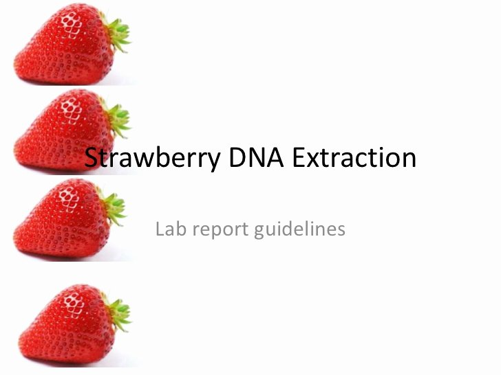 Strawberry Dna Extraction Lab Worksheet Lovely Strawberry Dna Lab Report