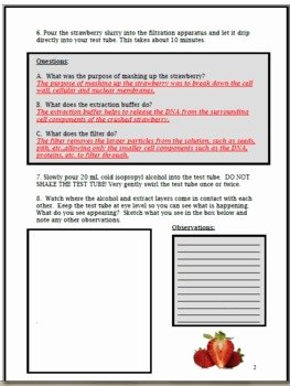 Strawberry Dna Extraction Lab Worksheet New Exploring Dna Strawberry Dna Extraction Lab by Cynthia