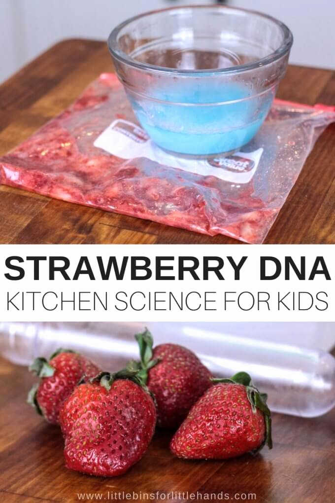 Strawberry Dna Extraction Lab Worksheet New Strawberry Dna Science Activity for Kids Food Science