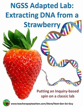 Strawberry Dna Extraction Lab Worksheet Unique Ngss Adapted Lab Extracting Dna From A Strawberry by Next