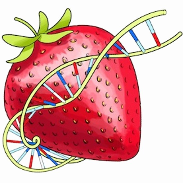 Strawberry Dna Extraction Lab Worksheet Unique Squishy Science Extract Dna From Smashed Strawberries