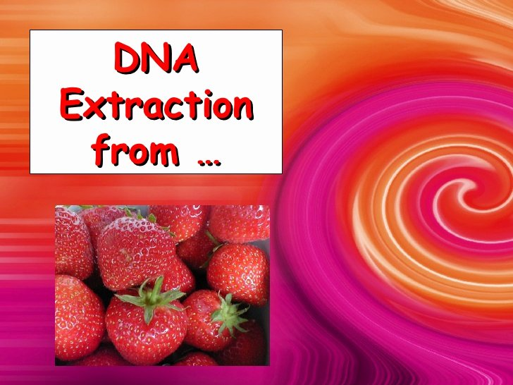 Strawberry Dna Extraction Lab Worksheet Unique Strawberry Dna Extraction
