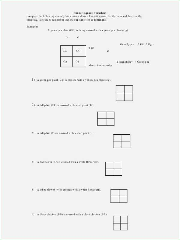 Symbiosis Worksheet Answer Key Inspirational Amoeba Sisters Ecological Relationship Answer Worksheet