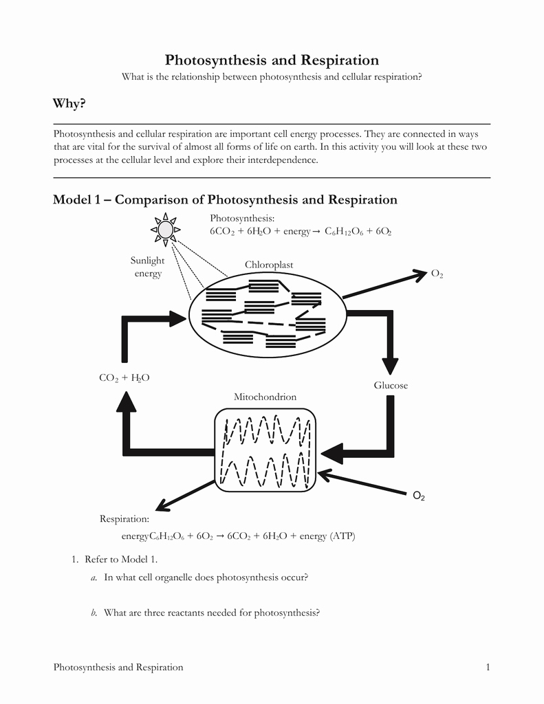 Symbiosis Worksheet Answer Key Inspirational Model 1 – Parison Of Synthesis and Respiration