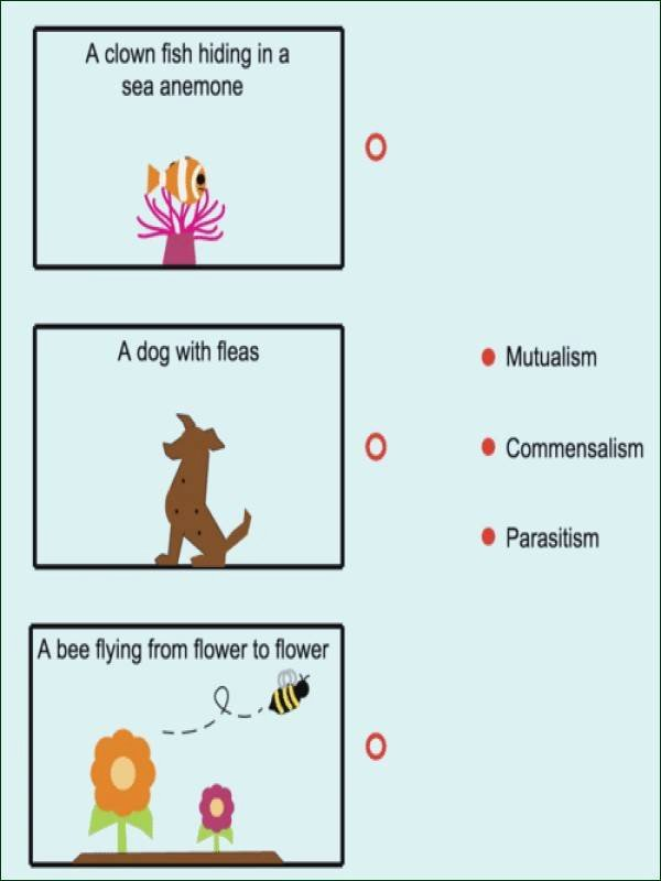 Symbiotic Relationships Worksheet Answers Lovely Symbiotic Relationships Worksheet