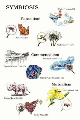 Symbiotic Relationships Worksheet Answers Luxury Symbiosis Relationships Worksheet Buscar Con Google