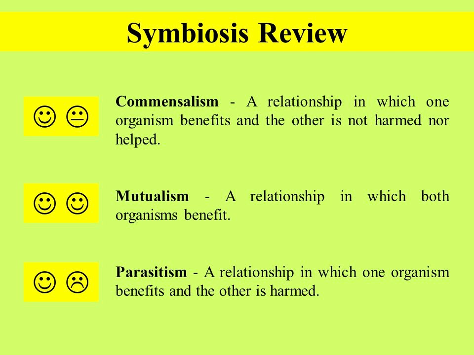 Symbiotic Relationships Worksheet Good Buddies Awesome Types Symbiosis Worksheet Worksheets for School Leafsea