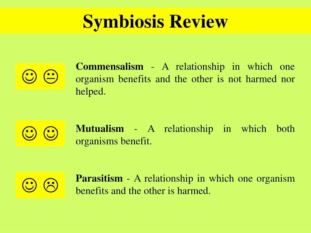 Symbiotic Relationships Worksheet Good Buddies Best Of Ppt Good Bud S Powerpoint Presentation Id