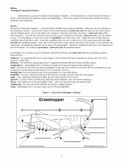 Symbiotic Relationships Worksheet Good Buddies Lovely Studylib Essys Homework Help Flashcards Research