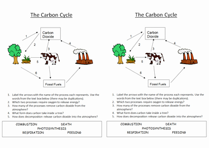 The Carbon Cycle Worksheet Answers Elegant B1 5 4 Carbon Cycle by Nryates157 Uk Teaching Resources