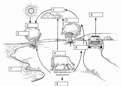 The Carbon Cycle Worksheet Answers Lovely Biology Basics Matter Cycling within Ecosystems Dummies