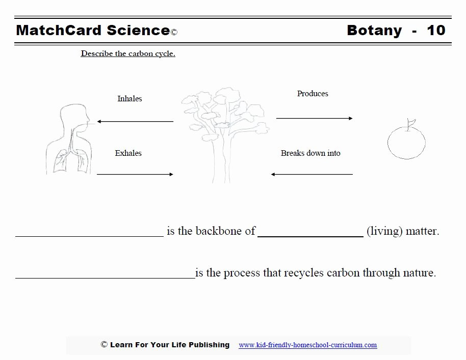 The Carbon Cycle Worksheet Answers Luxury Botany Science Projects