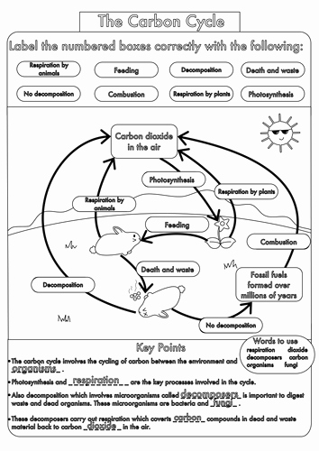 The Carbon Cycle Worksheet Answers Luxury Gcse Carbon Cycle Worksheets and A3 Wall Posters by