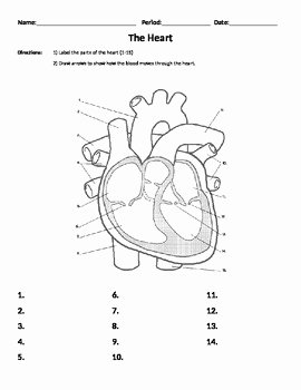 The Cardiovascular System Worksheet Beautiful I Heart Exponents Coloring Worksheet Answers Sketch