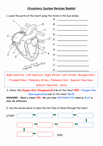 The Cardiovascular System Worksheet Elegant Heart Blood Vessels Chd Blood Revision Booklet by