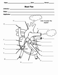 The Cardiovascular System Worksheet Inspirational High School Anatomy and Physiology Activities Internet