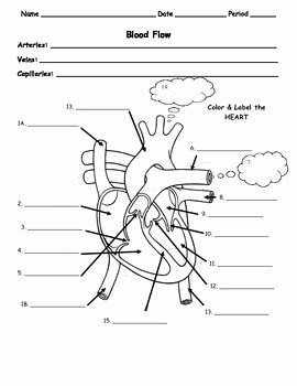 The Circulatory System Worksheet Awesome Human Body Circulatory Flow Of Blood In the Heart