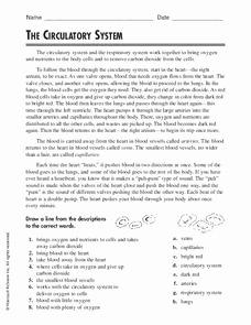 The Circulatory System Worksheet Fresh the Circulatory System Worksheet for 4th 5th Grade