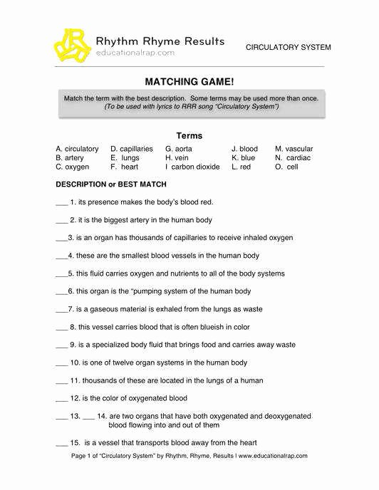 The Circulatory System Worksheet Fresh the Circulatory System Worksheet