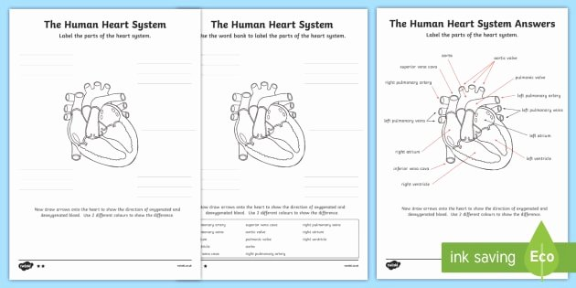 The Circulatory System Worksheet Inspirational the Human Heart Cardiovascular System Labelling Worksheet