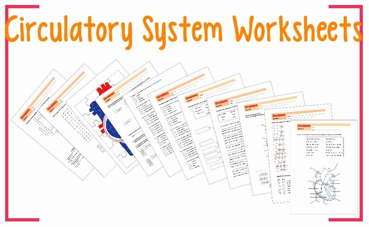 The Circulatory System Worksheet Luxury This Product is A Series Of Worksheets About the