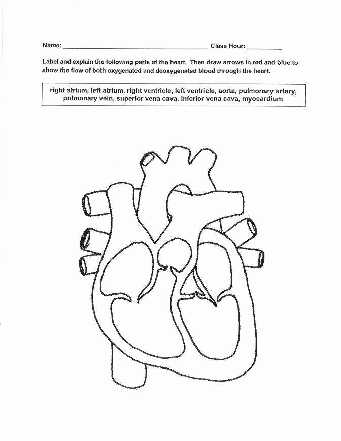 The Circulatory System Worksheet New the Circulatory System Worksheet