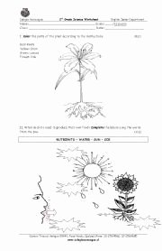 The Language Of Science Worksheet Beautiful Requirements for Growth Of Plants Natural Science