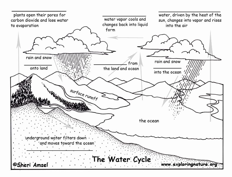 The Nature Of Science Worksheet Beautiful Cycles In Nature Worksheet