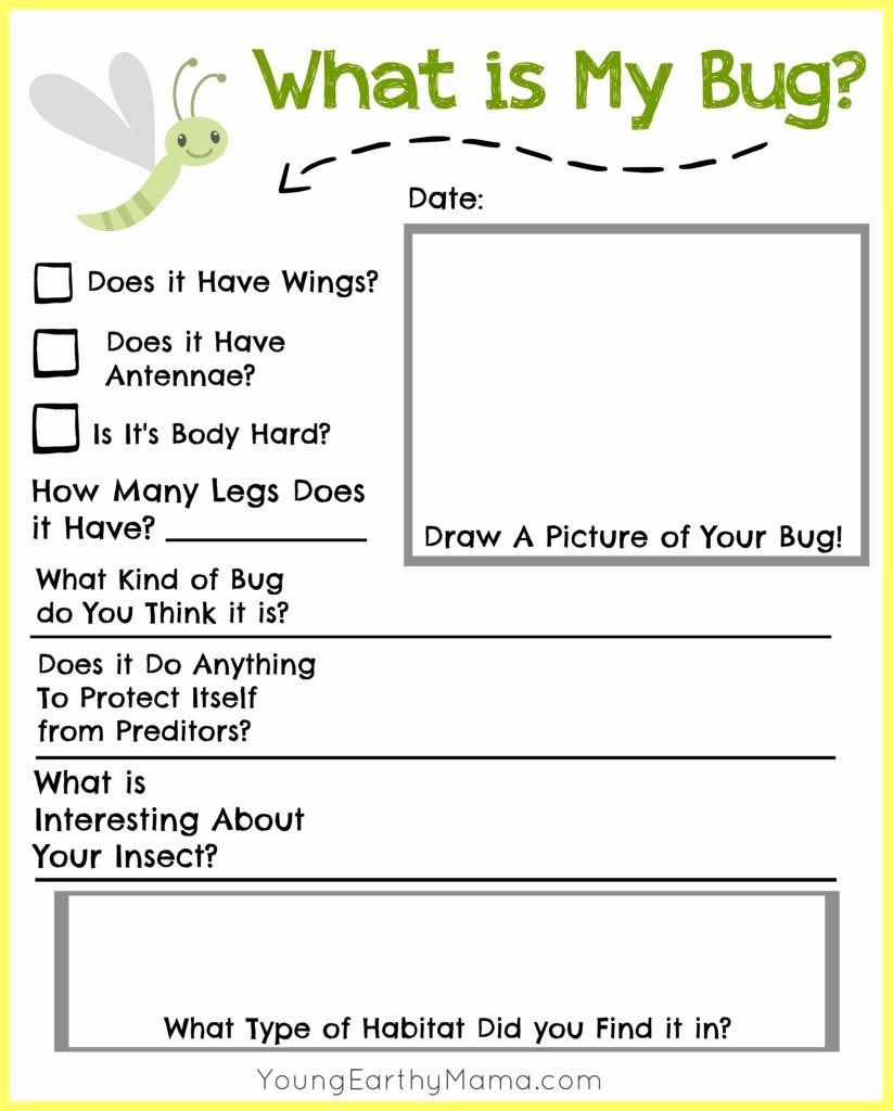 The Nature Of Science Worksheet Beautiful Worksheet Nature Science Worksheet Grass Fedjp