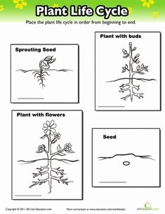 The Nature Of Science Worksheet Elegant 1000 Images About 1st Grade Life Science On Pinterest