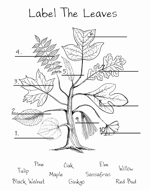 The Nature Of Science Worksheet Fresh Leaf Worksheet Just to Show the Different Shapes