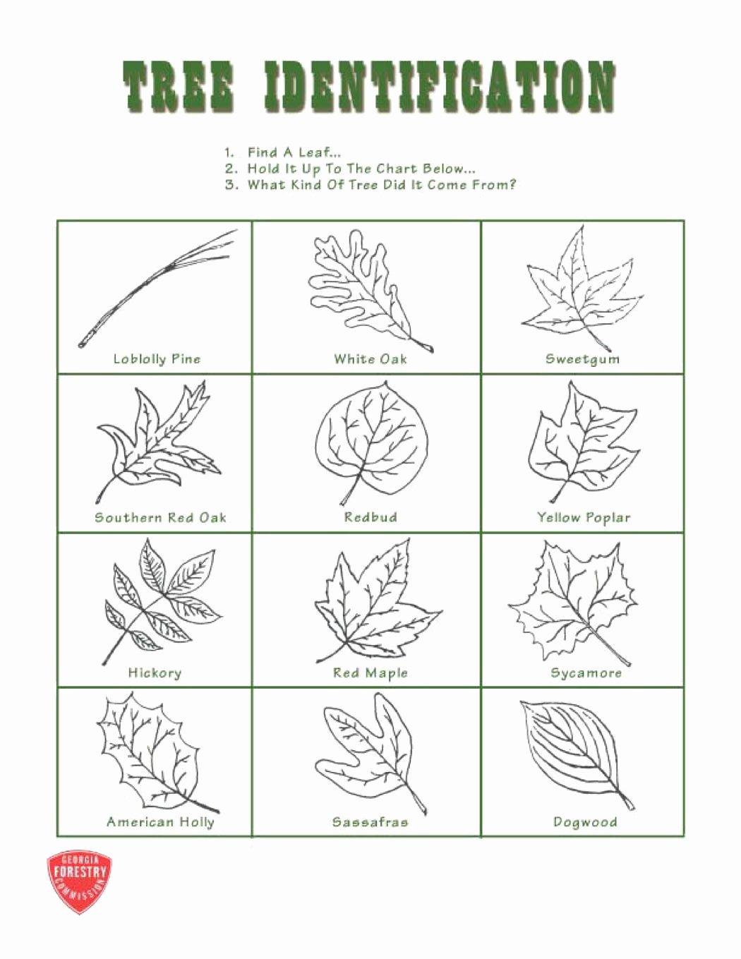 The Nature Of Science Worksheet Luxury Tree Identification On Pinterest