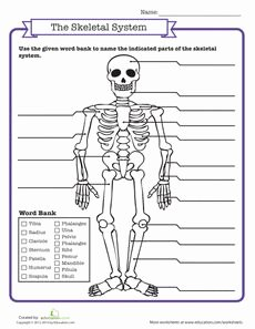 The Nature Of Science Worksheet Unique Free Internal organs Worksheet